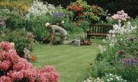 Cum îngrijim grădina pe vreme caniculară Vara cerul fara nori si soarele sunt cele mai bune