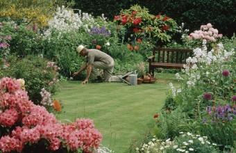 Cum îngrijim grădina pe vreme caniculară