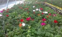 O intrebare si o invitatie adresata bucurestenilor - de ce nu veniti sa va cumparati plante
