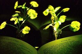 Inginerii au transformat plantele în sursă de lumină