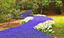 Un râu de flori care șerpuiește prin grădinile publice dintr-o localitate americană