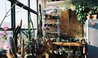 """6 greșeli pe care oricine ține plante în apartament le poate face Daca lista cu """"ce"""