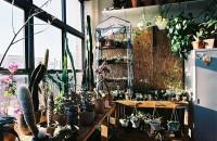 6 greșeli comune în îngrijirea plantelor de apartament