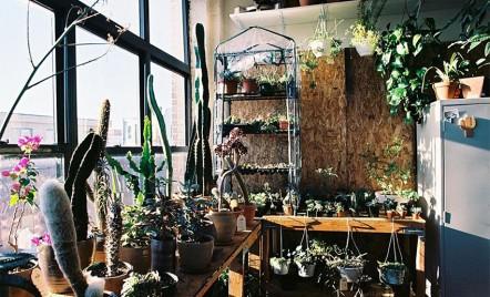 6 greșeli pe care oricine ține plante în apartament le poate face