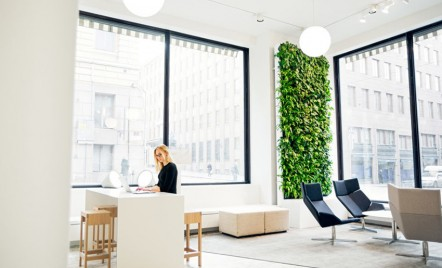 Care este legătura dintre un perete vegetal și inteligența artificială?