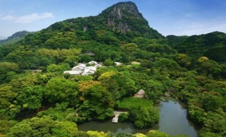 Parcul gigantic japonez transformat într-o pădure de lumină psihedelică