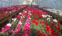 Flori frumoase in serele Biosolaris Producator de Plante Haideti sa le vedeti! Pentru unii dintre voi