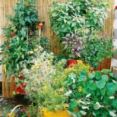 grădini frumoase