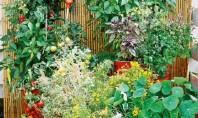 Idei simple pentru grădini de legume la fel de frumoase ca cele de flori Inspirandu-ne din