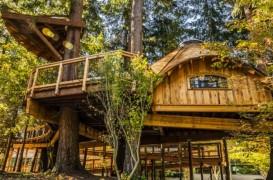 Te poți realaxa într-o casă în copac? Microsoft spune că da