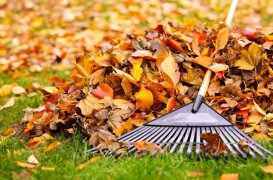 Frunzele uscate - un ajutor de incredere in gradina