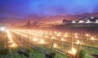 Sute de torțe aprinse încălzesc viile din nordul Italiei Imagini de basm Sute de torte ard