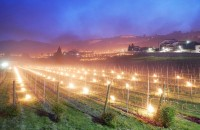 Sute de torțe aprinse încălzesc viile din nordul Italiei. Imagini de basm