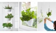 Idei pentru gradina din apartament - plante agatate de pereti si tavane Gaseste aici o serie