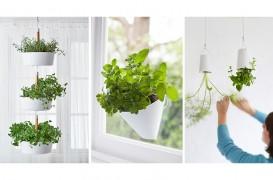 Idei pentru grădina de apartament - plante agăţate de pereţi şi tavane
