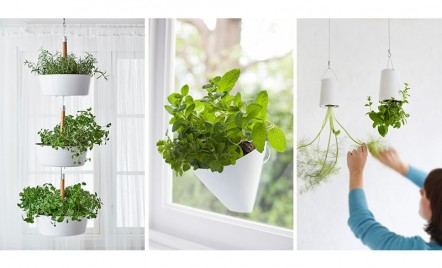 Idei pentru gradina din apartament - plante agatate de pereti si tavane