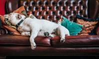 De ce trebuie să ții seama atunci cand alegi o canapea Sunt mii de modele pe