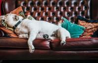 De ce trebuie să ții seama atunci cand alegi o canapea