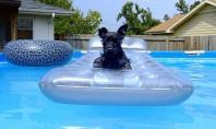 Pregatirea pentru sezonul cald Asociatia Patronala pentru Piscine si Wellness va ofera sfaturi pentru pregatirea piscinei