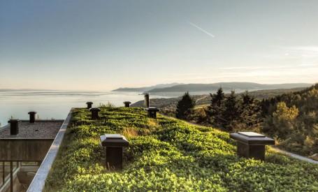 Beneficii ale acoperisurilor cu vegetatie