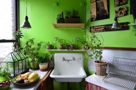 Ce plante să păstrezi în bucătărie și unde să le poziționezi