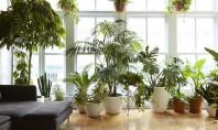 Plante de interior care vor supraviețui în apartamentele noastre Alegerea corecta a unei plante pentru apartament