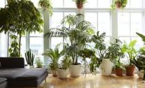 Plante de interior care vor supraviețui în apartamentele noastre
