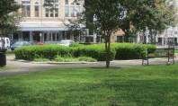 Transformarea maidanelor în spații verzi poate fi un antidot pentru depresie Cercetatorii de la Scoala de