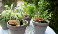 Ghivece cu ierburi aromatice Astazi va propunem sa umpleti cateva ghivece cu plante aromatice numai bune