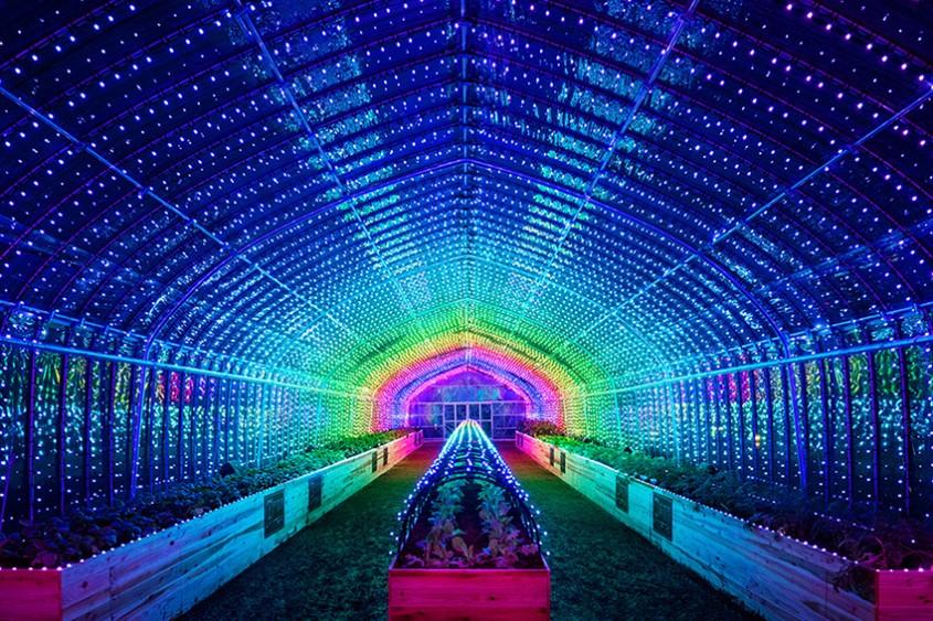 Sera în care, dacă atingi plantele, declanșezi un show de lumini și culori!