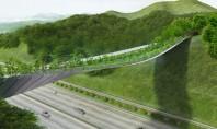 Un pod cu vegetație ține la distanță animalele sălbatice de o autostradă aglomerată Podul asigura o