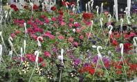 Învață să dai culoare grădinii tale la EXPO FLOWERS & GARDEN Manifestarea oferă vizitatorilor soluții practice