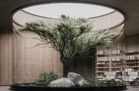 Planul B, o casă subterană cu un arbore în mijlocul livingului