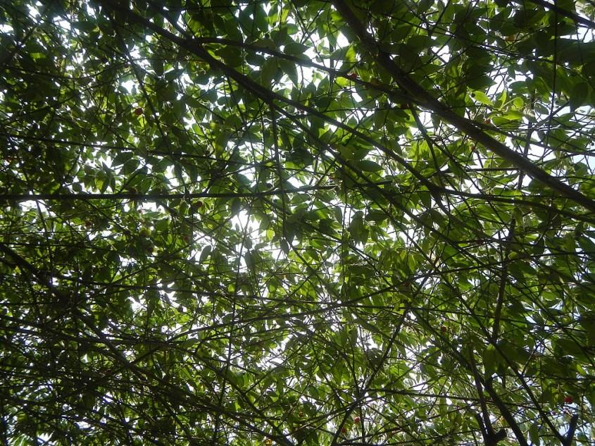În această țară elevii și studenții trebuie să planteze câte 10 copaci înainte de absolvire