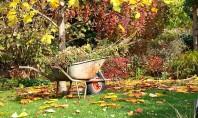 Ce ai de făcut la începutul lui septembrie în grădină? Iti vom spune ce ar trebui