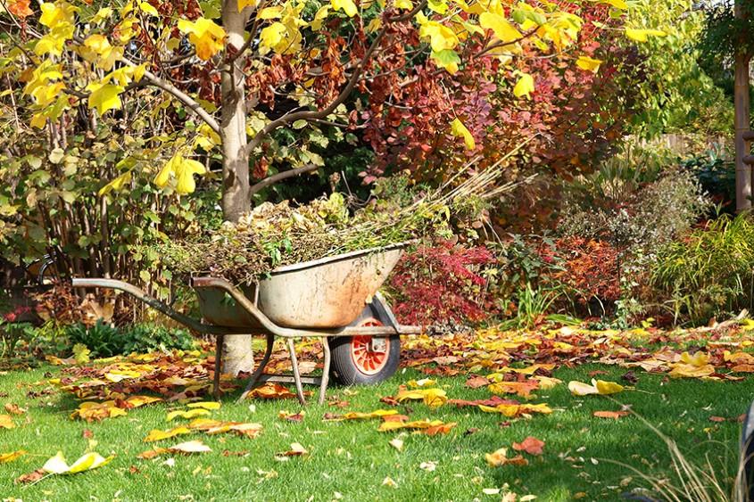 Ce ai de făcut la începutul lui septembrie în grădină?