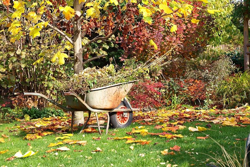 Când toamna începe să se așeze peste grădină: ce ai de făcut la începutul lui septembrie?