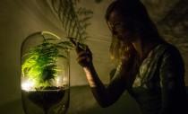 A fost creată o lampă care se alimentează prin fotosinteză