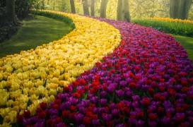 Cea mai frumoasă grădină de flori din lume pe timp de pandemie. Imagini de poveste