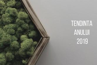 Amenajarea cu licheni, tendința anului 2019
