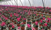 Primăvara a venit! Da în serele Biosolaris Primavara vine mereu mai devreme in serele Biosolaris Producator