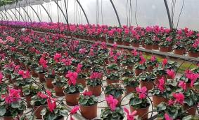 Primăvara a venit! Da, în serele Biosolaris