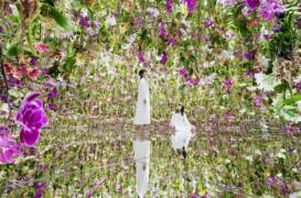 Mii de orhidee plutesc în jurul vizitatorilor într-o grădină ca niciuna alta