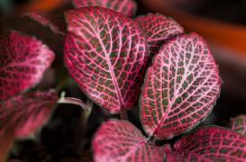 9 plante potrivite pentru birou care ne vor ajuta să fim mai productivi mai sănătoşi mai