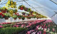 De ce sa alegeti flori produse in Romania? Majoritatea florilor comercializate pe piata romaneasca sunt din