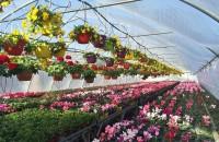 De ce sa alegeti flori produse in Romania?