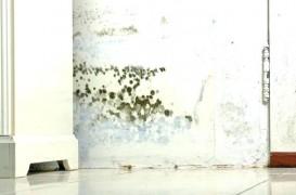 Mucegaiul în casele și construcțiile noi. Cauze și soluții