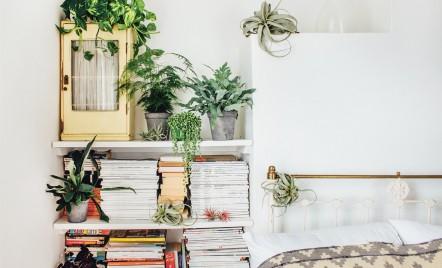 Cum alegi plantele potrivite pentru fiecare cameră din casă