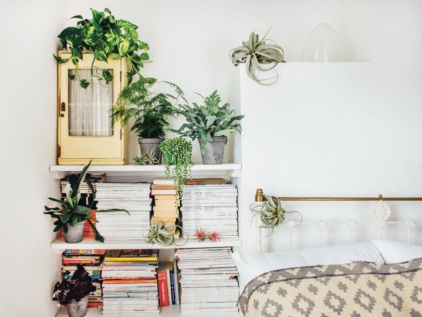 plante dormitor - Cum alegi plantele potrivite pentru fiecare cameră din casă