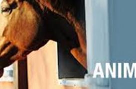 Menţineţi sănătatea cailor prin îndepărtarea prafului cu un aspirator central